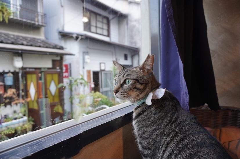 【重要】【猫が脱走した時】ペット探偵が教える対処法