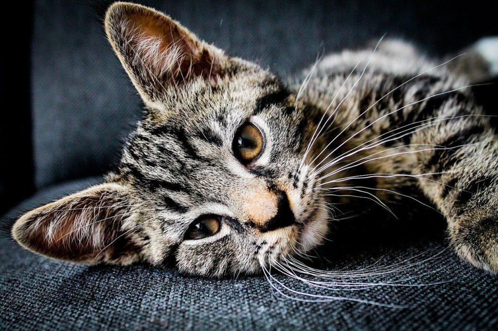 危険!猫が餌を残してしまう原因3選