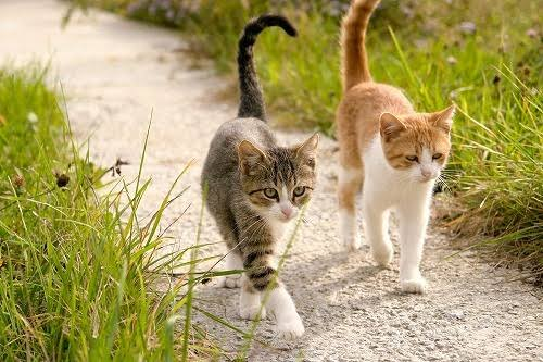 【保存版】猫の探し方。迷子猫の動きを捕らえる【猫探偵】