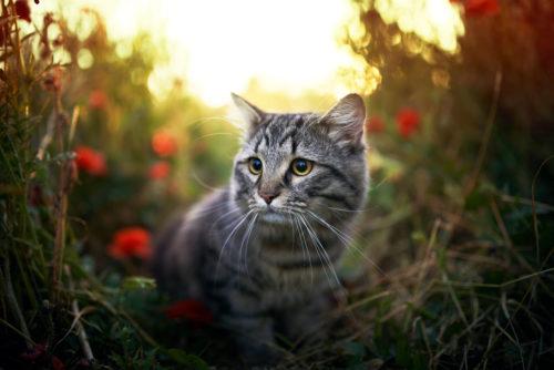 【猫探し大阪】猫の探し方!コツ。プロの目線から【ペットレスキュー】