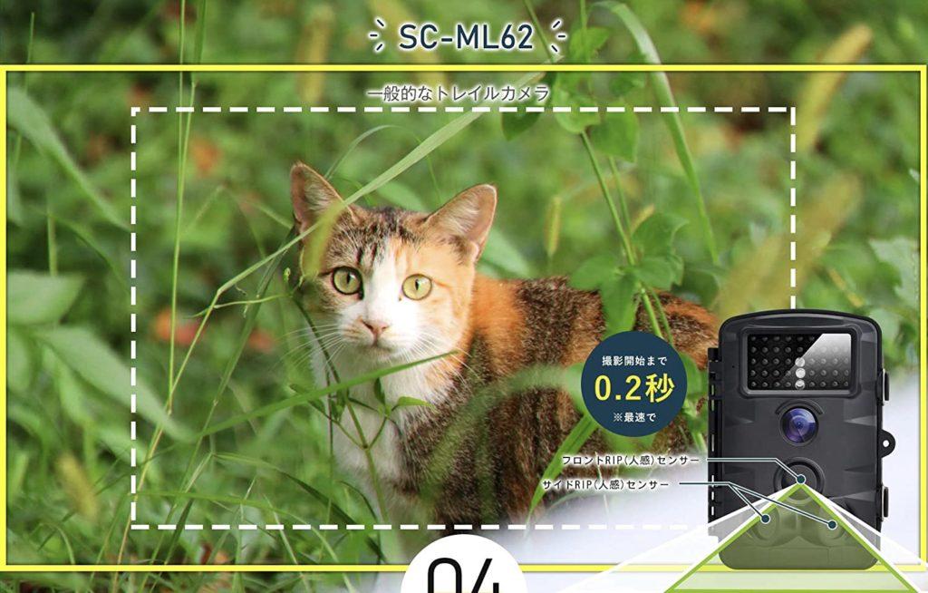 【猫探しで実証された】迷子猫を導くテクニックで保護成功【ペット捜索有料級】