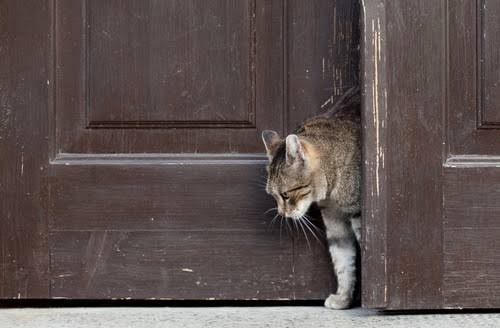 【猫探し必見】愛猫が脱走してしまったら?まずやるべき事や探すポイント!